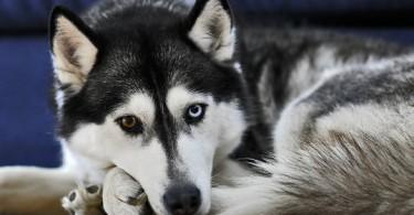 все собаки попадают в рай