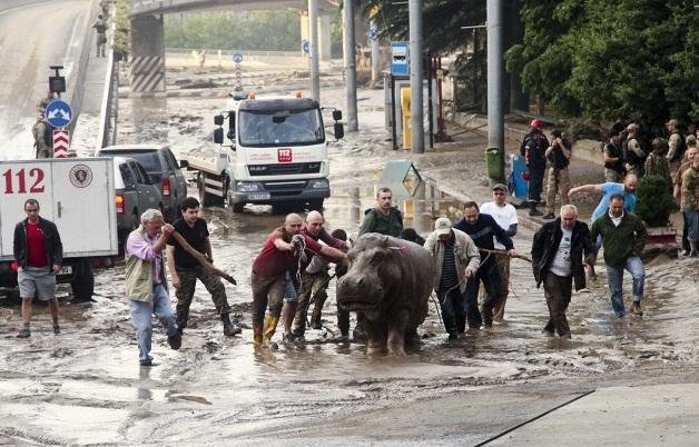 потоп в зоопарке