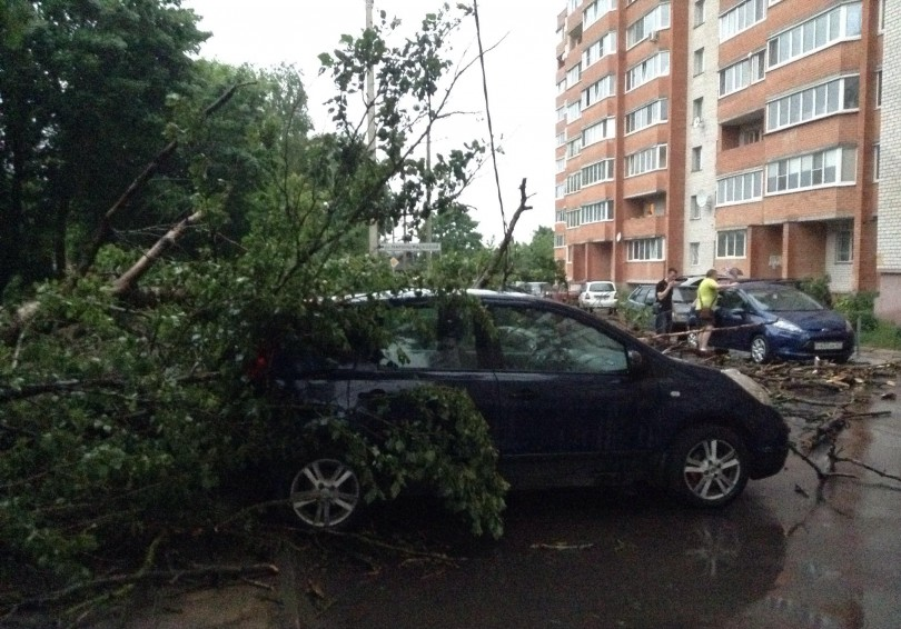 в смоленске упало дерево