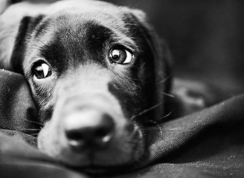 собачий приют смоленск