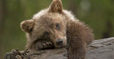 в тбилиси мужчина спас медвежонка
