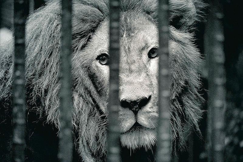 цирк без животных, смоленск, keytown.me