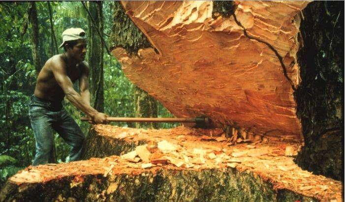 Тимирязева спил деревьев Смоленск