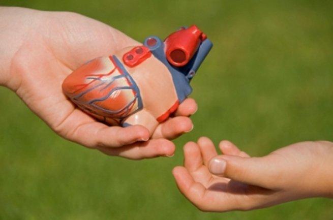 доноры органов трансплантация Смоленск