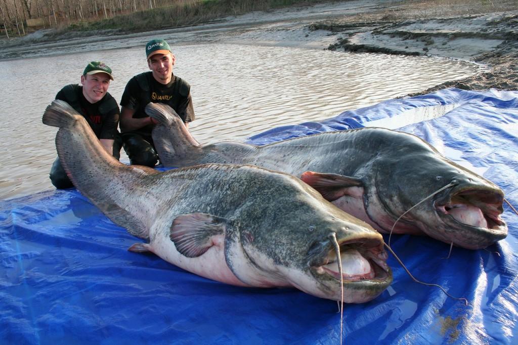 рыба Демидов Смоленская область Акатовское озеро мор