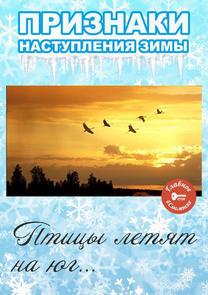Свежую кинза заготовка на зиму