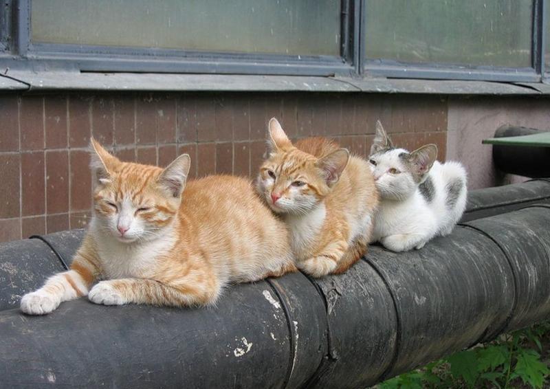 коты отопительный сезон в смоленске