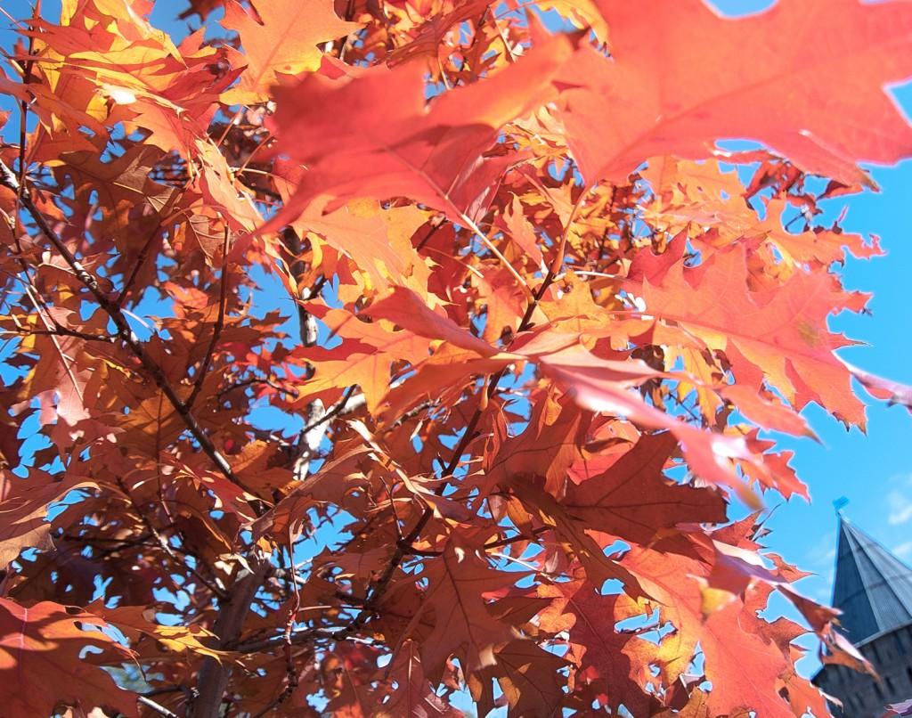 осень в смоленске