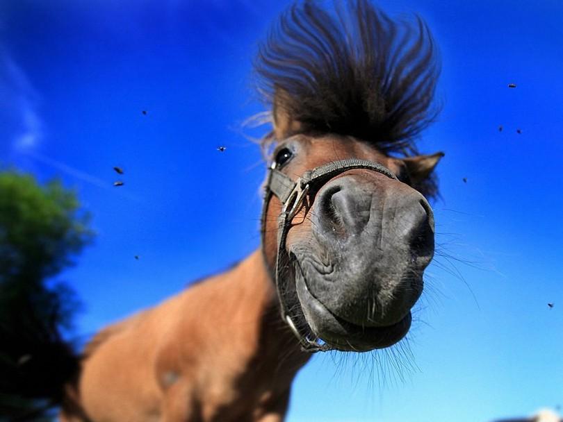 лошади Смоленск