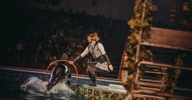 цирк на воде аква шоу смоленск юбилейный фок