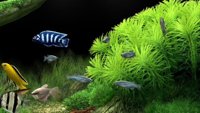 аквариум смоленск мэрия
