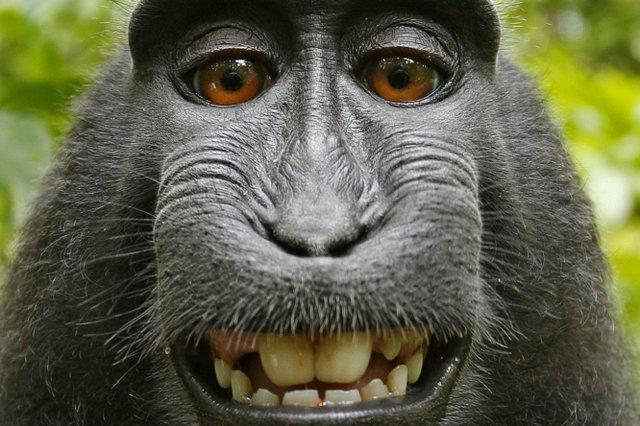 день обезьян