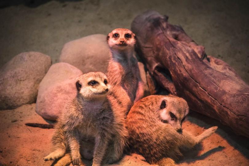 keytown.me контактный зоопарк смоленск макси