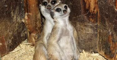 смоленский зоопарк животные