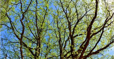 12.05.2016 г., дубы, оз.Баклановское. Фотограф: Геннадий Дубино