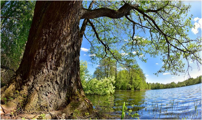13 мая 2016 г., озеро Ржавец, д.Городище, Демидовский район. Фотограф: Геннадий Дубино