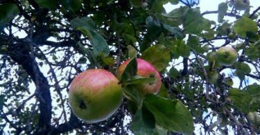 Яблочный спас, Смоленск
