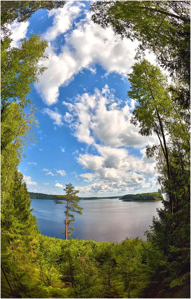 10 августа 2016 г., озеро Сапшо, Демидовский райо