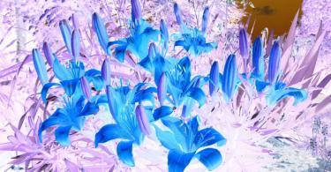 лилии негатив синие