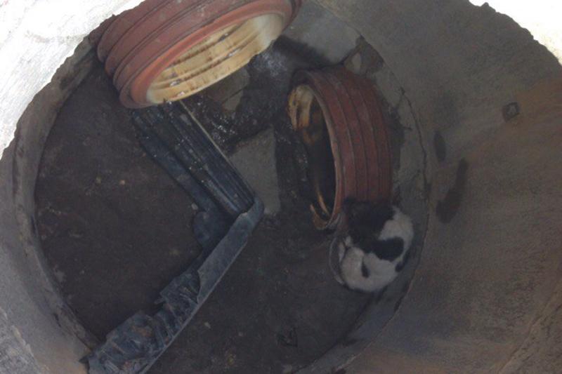 в Смоленске в люк провалилась собака