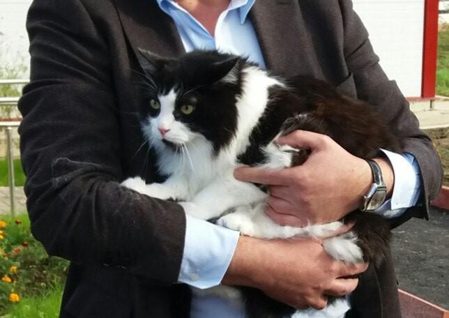 алексей островский и его кот