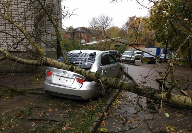 ВЯрославле дерево упало наприпаркованные авто
