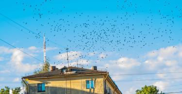 Другой Смоленск в сентябре