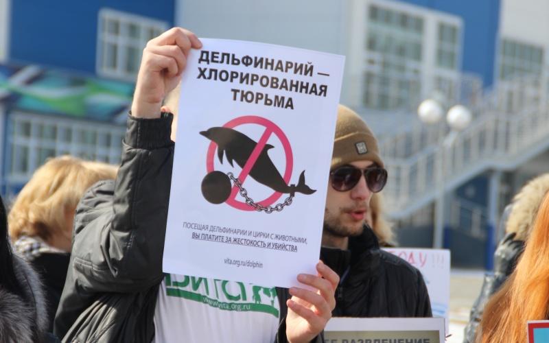 пикет против переездных дельфинариев в Смоленске