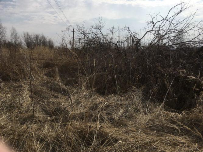 пал травы в Смоленске и Смоленской области